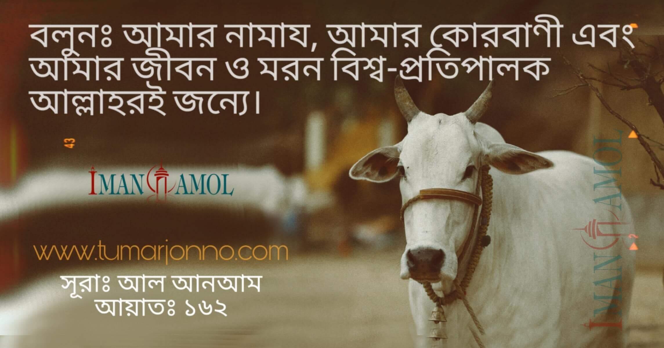 #eid #cow
